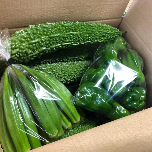 野菜詰め合わせ ゴーヤ15本 オクラ10本 ピーマン20個 食品/飲料/酒の食品(野菜)の商品写真