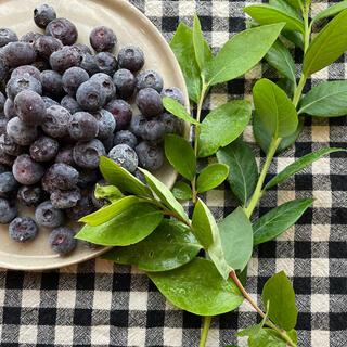 冷凍ブルーベリー 2キロ(フルーツ)