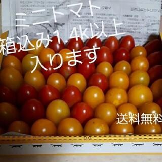 無農薬野菜 ミニトマト(野菜)