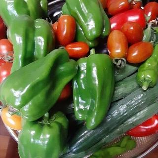自然栽培 取れ立て野菜 60センチ段ポール