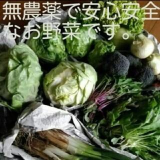 無農薬野菜 詰め合わせセット(野菜)