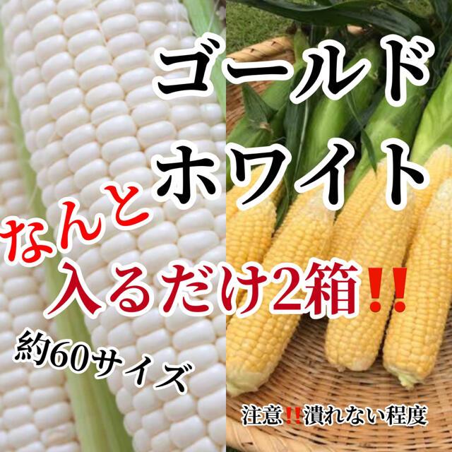 No様専用2箱割引 食品/飲料/酒の食品(野菜)の商品写真