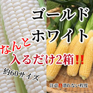 No様専用2箱割引(野菜)