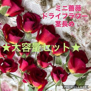 大容量!ミニミニ薔薇(茎長め)ドライフラワー★25輪セット+おまけ2輪付き★花材(ドライフラワー)