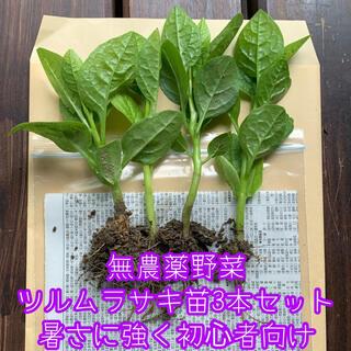 無農薬野菜*ツルムラサキの苗3本セット+予備1本*暑さに強く育てやすい!*