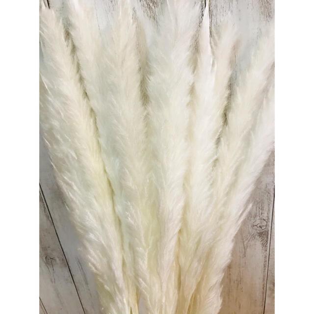 ドライフラワー インテリア パンパスグラス20本 テールリード スワッグ花材 ハンドメイドのフラワー/ガーデン(ドライフラワー)の商品写真