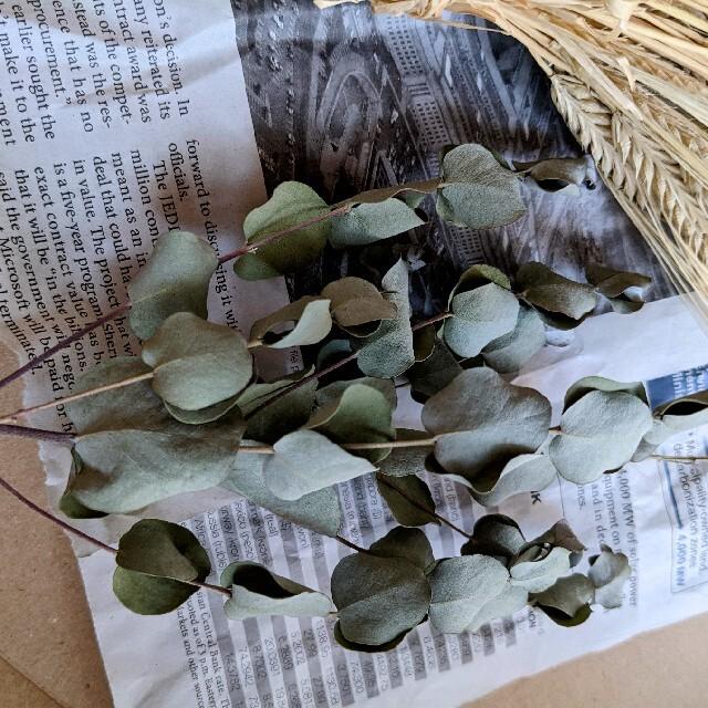 ドライフラワー 麦 ユーカリ ハンドメイドのフラワー/ガーデン(ドライフラワー)の商品写真