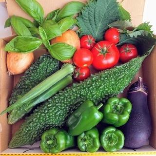 ✨無農薬.とれたて野菜8種類セット✨
