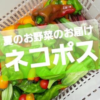 夏のお野菜のお届けお任せ。ネコポス。翌日配送地域のみm(_ _)m。(野菜)