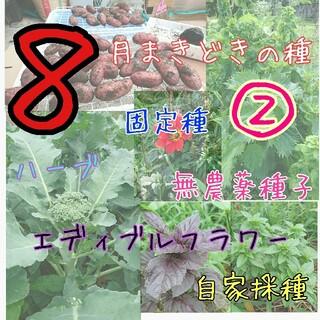 8月まきどきの種② 固定種 無農薬 無消毒 種子 種 野菜の種 ハーブ (野菜)