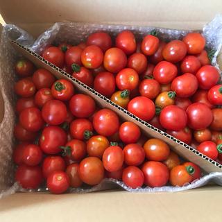 ミニトマト1.8kg