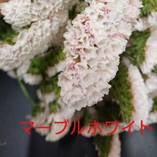 KAWORI様☆専用  スターチス『マーブルホワイト』50cm10本(ドライフラワー)