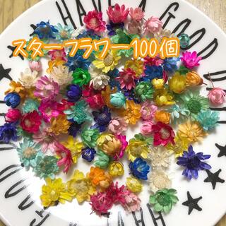 スターフラワー100個 ヘッドのみ ハーバリウム花材(ドライフラワー)