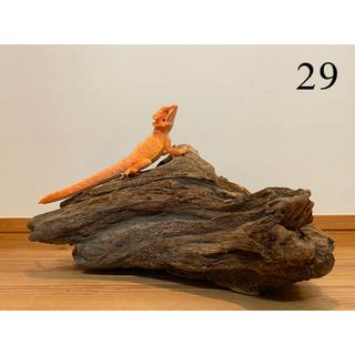 大型 流木【29】