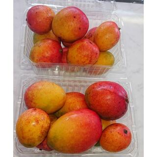 甘くとろける!沖縄産ミニマンゴー 1.3kg残りわずか!