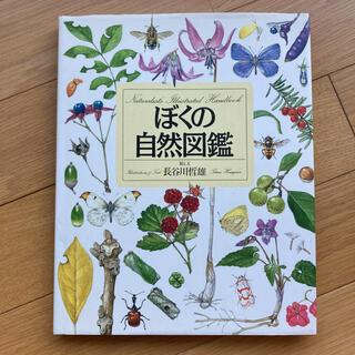 ぼくの自然図鑑(絵本/児童書)