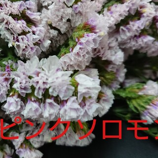 《レア品種》スターチス『ピンクソロモン』50cm10本(ドライフラワー)