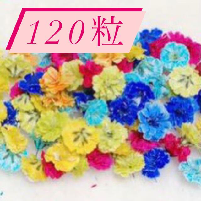 かすみ草ドライフラワー 120粒♡ ハンドメイドのフラワー/ガーデン(ドライフラワー)の商品写真