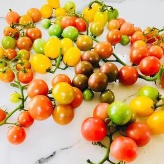 カラフルガーデンミニトマト ミックス1kg  フレッシュハーブ付き(野菜)