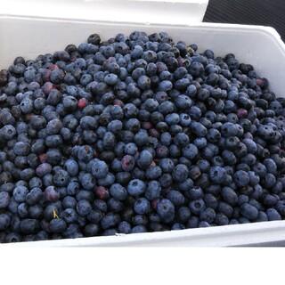 冷凍完熟ブルーベリー  一キロ(フルーツ)