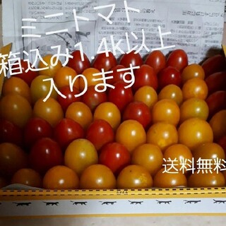 無農薬 ミニトマト