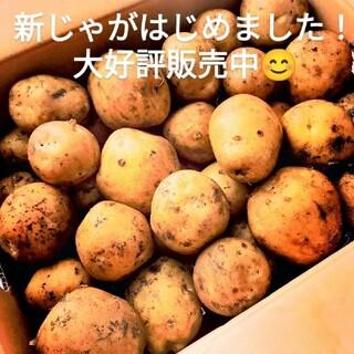 【数量限定 新じゃが!】北海道産 新品種 じゃがいも「とうや」3㎏