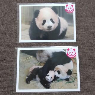 シャンシャン ポストカード パンダの仔 パンダの親子 2枚セット(印刷物)