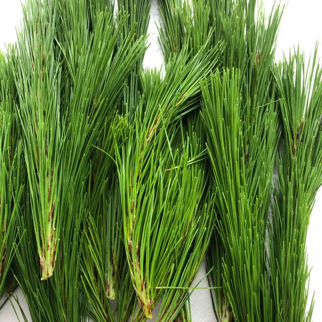 松葉 赤松の新芽500g 食品/飲料/酒の食品(野菜)の商品写真
