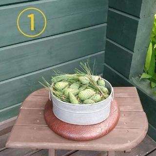 【完全無農薬】松葉の新芽 と 青ぼっくり のセット(野菜)