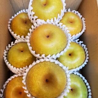 タイムセール!! 一番人気の品種始まりました。愛知県産「幸水梨」小玉サイズ
