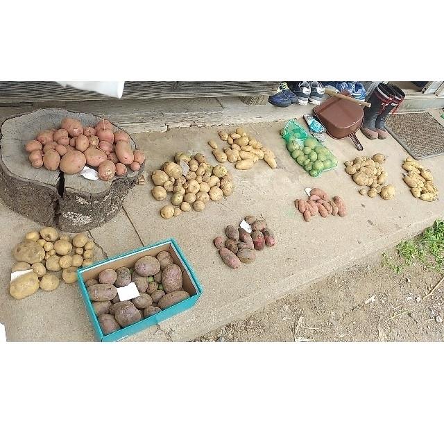 じゃがいもアラカルト(増量可能) 食品/飲料/酒の食品(野菜)の商品写真