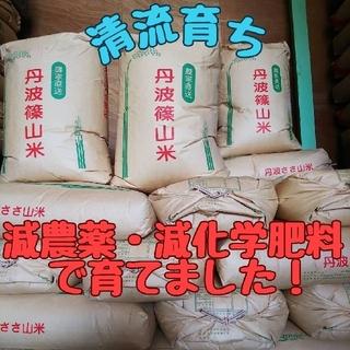 清流育ち 兵庫県丹波篠山米 玄米10kg(減農薬,減化学肥料栽培)令和2年産