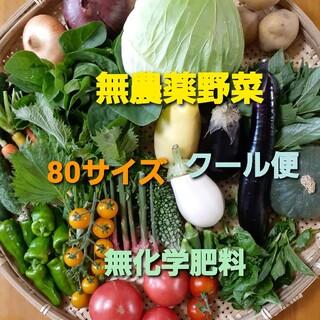 無農薬野菜セット 8月6日以降の収穫 80サイズ クール便