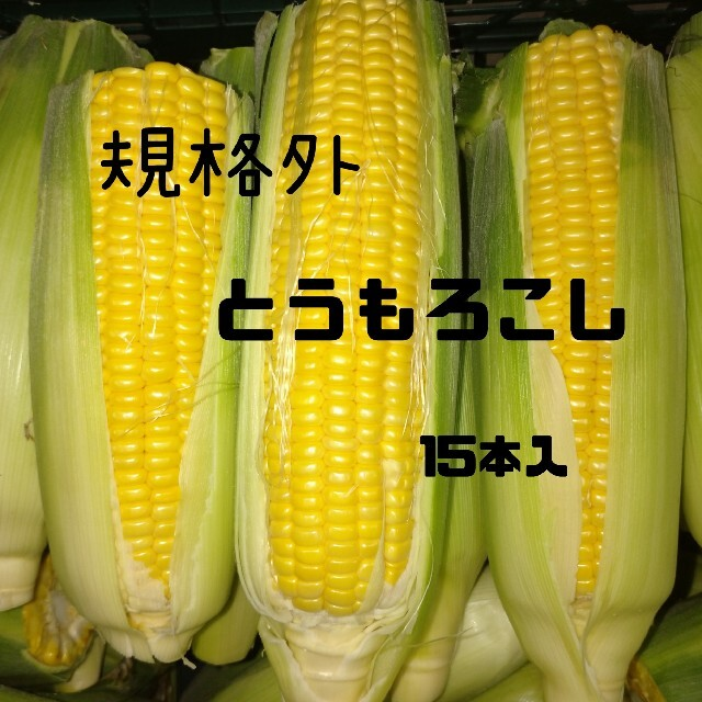規格外とうもろこし(黄色)15本 食品/飲料/酒の食品(野菜)の商品写真