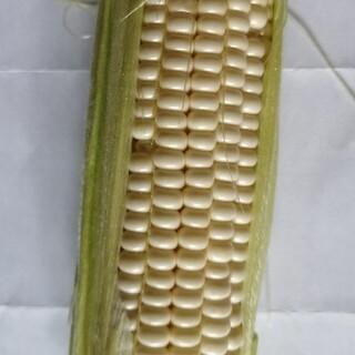 朝採りピュアホワイトトウモロコシ(野菜)