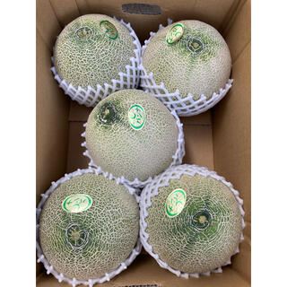 送料込み!千葉県産 パンナメロン 2Lサイズ 5玉