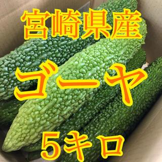 路地ゴーヤ 5キロ 宮崎県産