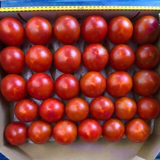 8月4日収穫フルーツトマト(野菜)