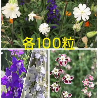 花の種【シレネホワイトキャンピオン・千鳥草・シレネガリカ】各100粒(その他)