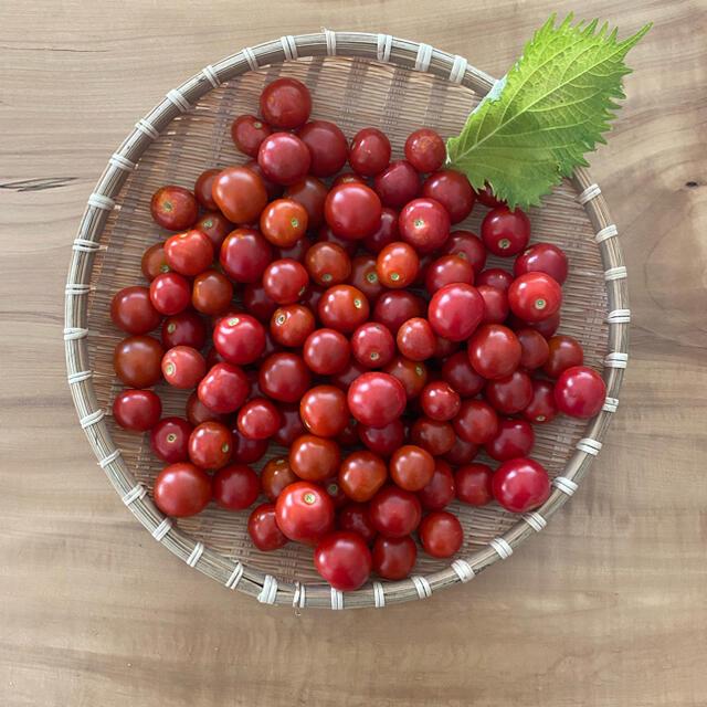 ミニトマト 約800g 食品/飲料/酒の食品(野菜)の商品写真