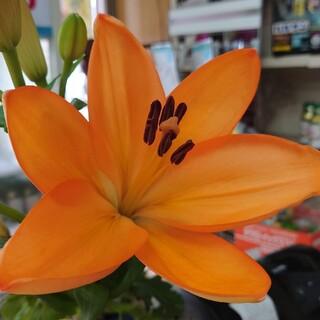 COACH - COACH長財布 新品未使用品 紺×オレンジ F78202