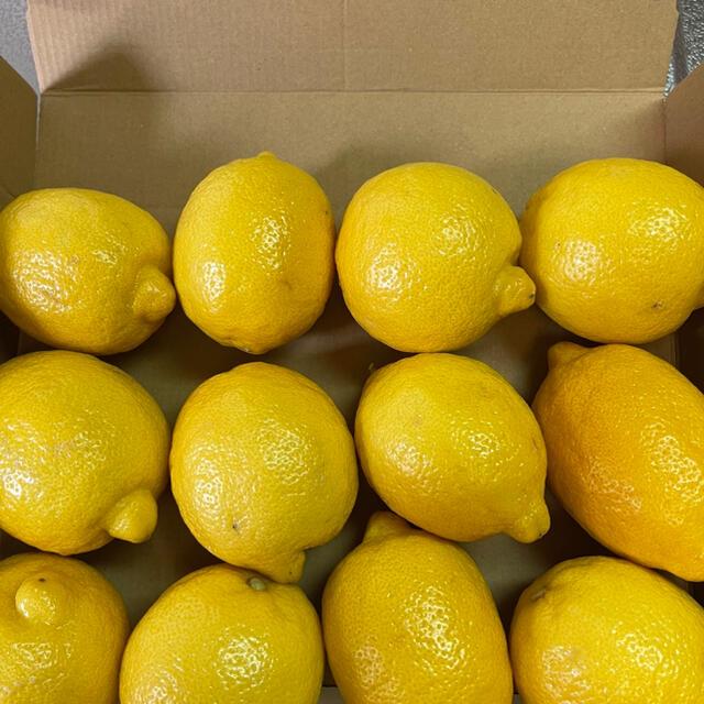 国産瀬戸内レモン 食品/飲料/酒の食品(フルーツ)の商品写真