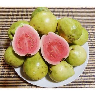 お買い得!甘くとろける!沖縄産グアバピンク無農薬かわいい小玉!1.2kg(フルーツ)