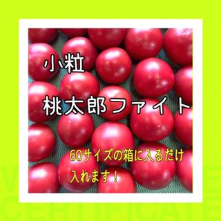 ★8月4日発送★甘い小粒桃太郎ファイト‼️(野菜)