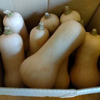 バターナッツかぼちゃ6.0kg(農薬化学肥料不使用)