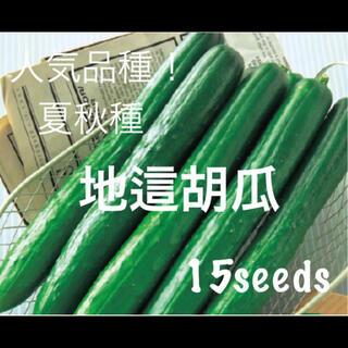 あん様専用 地這胡瓜 種15粒 紫小松菜 種30粒(野菜)