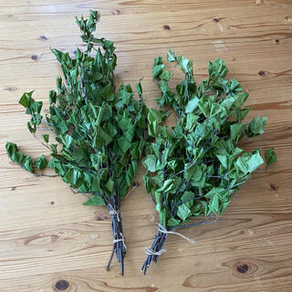 乾燥ヴィヒタ×2本 北海道産白樺 50cm 新品(ドライフラワー)