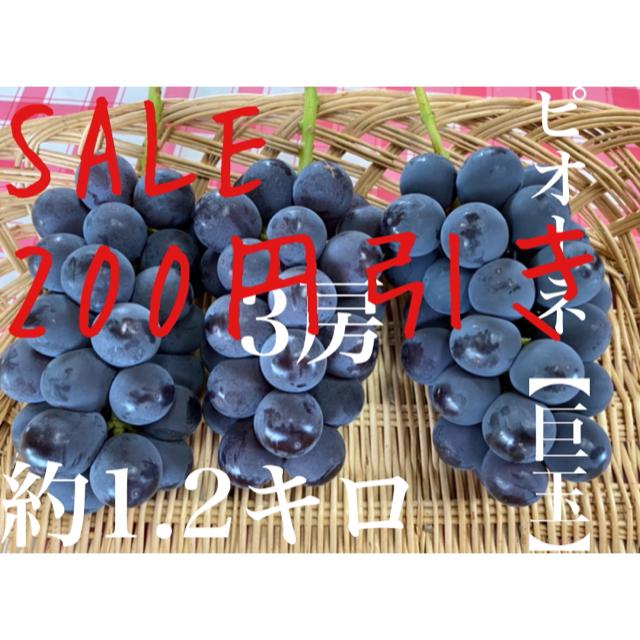 大玉葡萄 ピオーネ 福岡県産 農家直送 本日限定SALE 食品/飲料/酒の食品(フルーツ)の商品写真