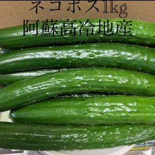 阿蘇のきゅうり ネコポス1kg ❗️次回発送8月7日❗️(野菜)