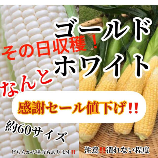 マコマコ様専用 食品/飲料/酒の食品(野菜)の商品写真